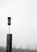 Lonely Birdhouse